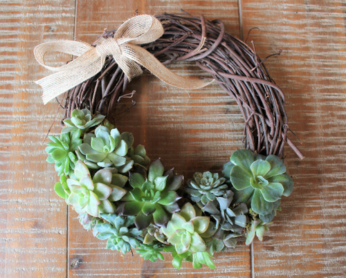 succulent vine wreath 10 inch