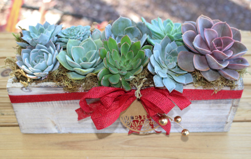 succulent arrangement Holiday decorated, wash wood container