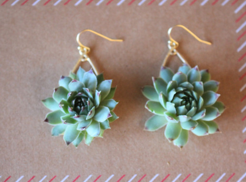 Gift Succulent Earrings Live Plant
