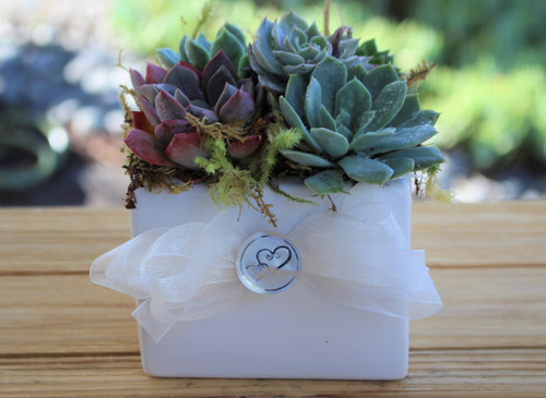 Succulent Garden in  White Ceramic  Planter, Gift Plant