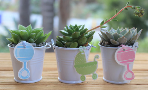 baby shower white pots with plant