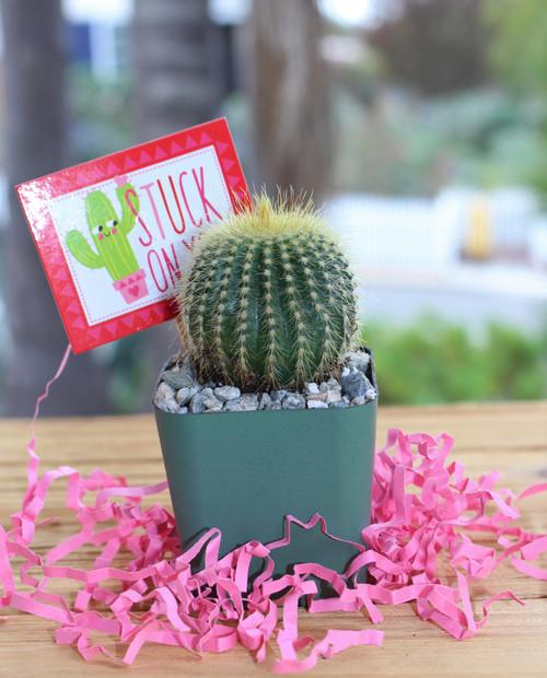 mini cactus gift stuck on you