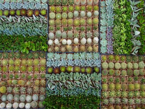 Cactus -Succulent  20 Mini Plants