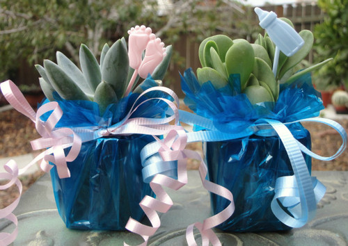 Mini plant decorated Baby Shower