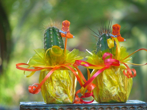 mini cactus party favor tex-mex