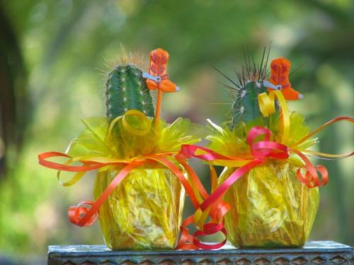 mini cactus party favor tex-mex