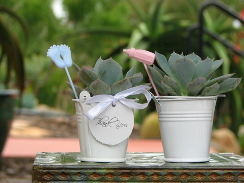 mini plants in white buckets