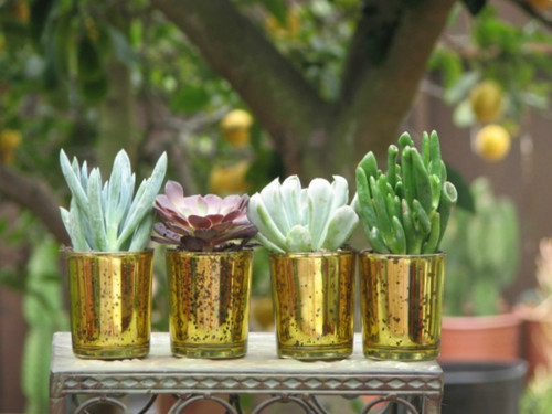 mini succulent plant in gold container
