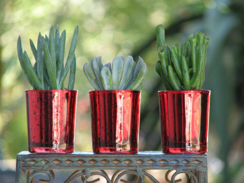 succulent poted in red glass container