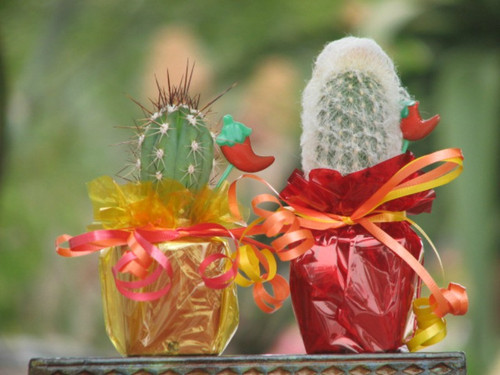 mini cactus Mexican fiesta party favors