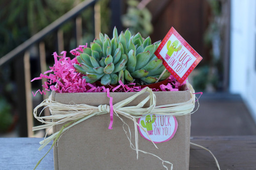 Stuck on You Succulent Gift Plant
