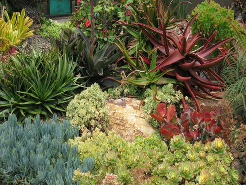 landscape plants, easy care, low water, low maintenance