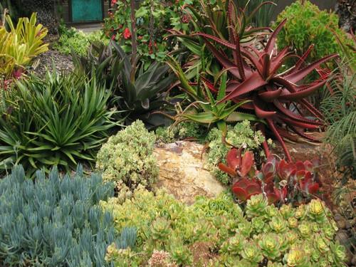 landscape plants, easy care, low water, low maintenance