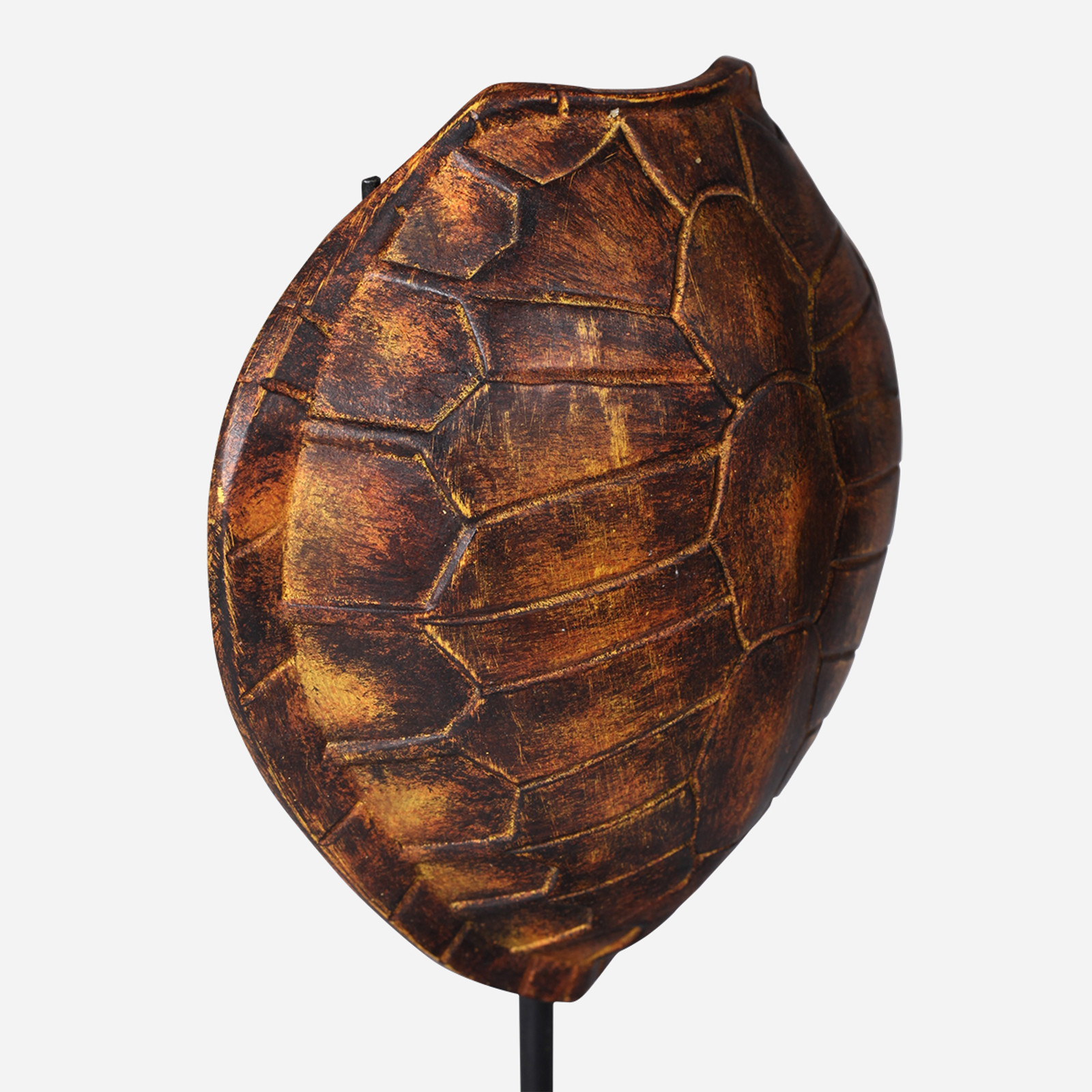 Faux Olive Ridley Turtle Shell on Stand