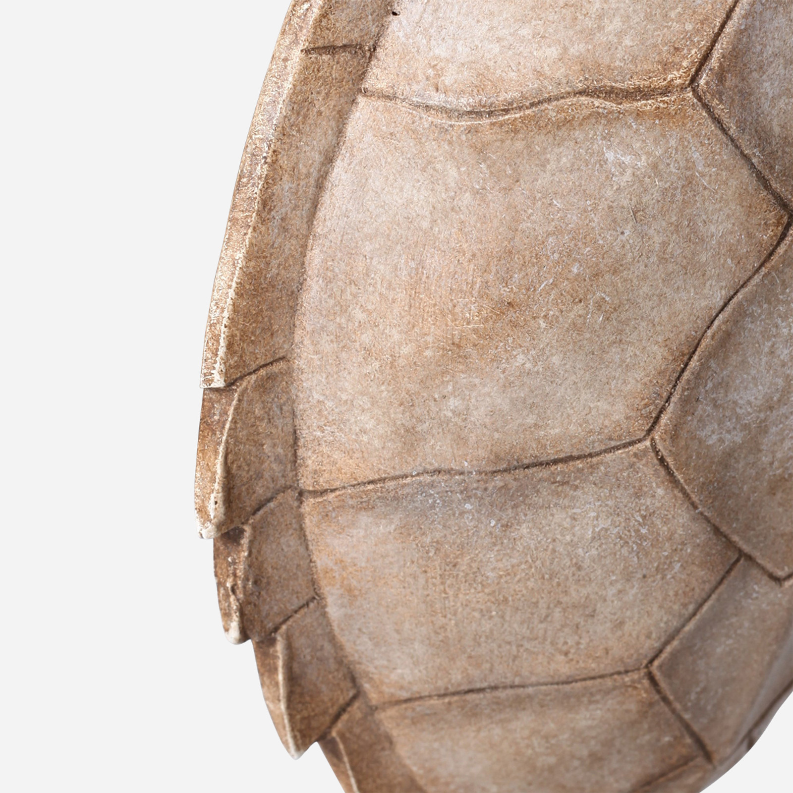 Faux Hawksbill Turtle Shell on Stand