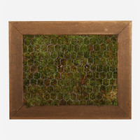 Moss Frame, 6