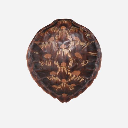Faux Loggerhead Turtle Shell