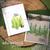 Whispering Pines   4x6 Photopolymer Stamp Set   ©2015 Newton's Nook Designs
