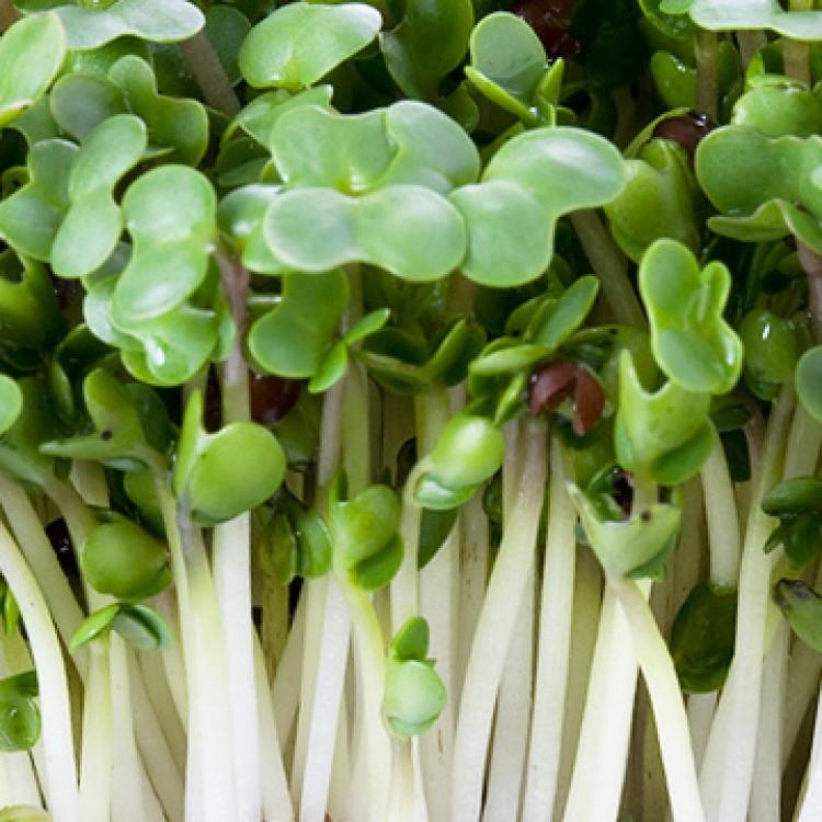 broccolisprout-750x750.jpg