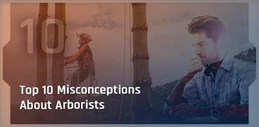 10 Common Misconceptions About Arborists