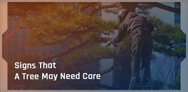 A Guide To When A Tree Needs Care