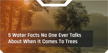 5 Water Facts No One Ever Talks About When It Comes To Trees