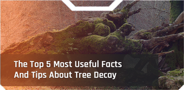 The Top 5 Most Useful Facts And Tips About Tree Decay