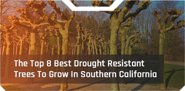 The Top 8 Best Drought Resistant Trees To Grow In Southern California