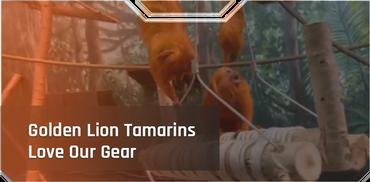 Golden Lion Tamarins Love Our Gear