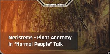 "Meristems - Plant Anatomy In ""Normal People"" Talk"