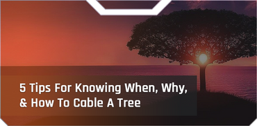 5 Tips For Knowing When, Why & How To Cable A Tree