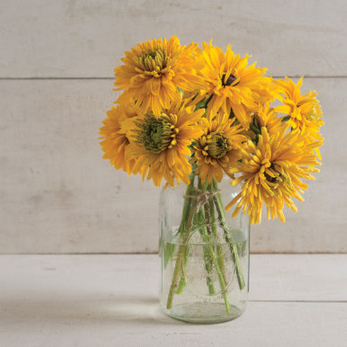 Rudbeckia, Goldilocks, Cut Flower, Yellow Cut Flower