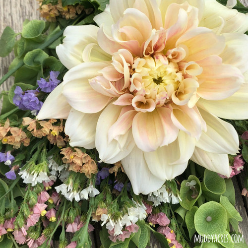 Dahlia, Breakout, Blush, Wedding, Dinnerplate
