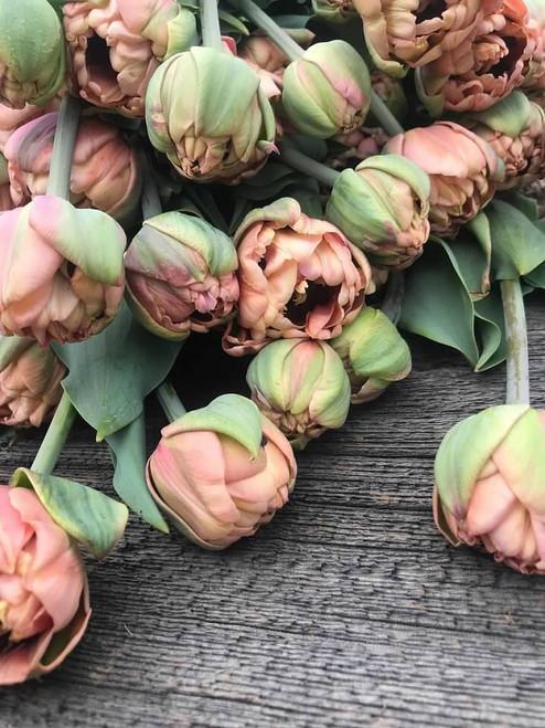 La Belle Epoque, tulip, double tulip, tulip bulbs