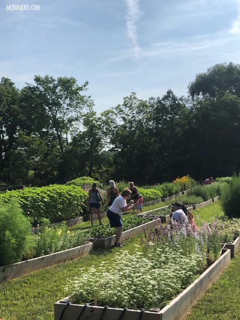 U-Pick Farm Visit - August 7th   9-11am