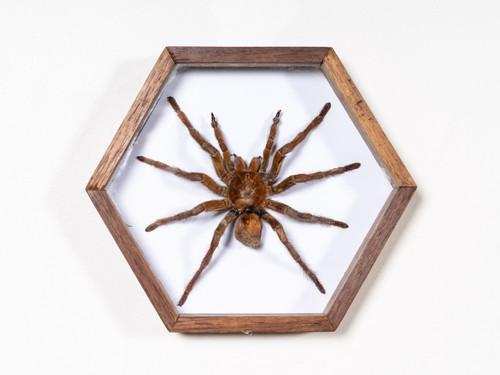 VINTAGE SPIDER BOX