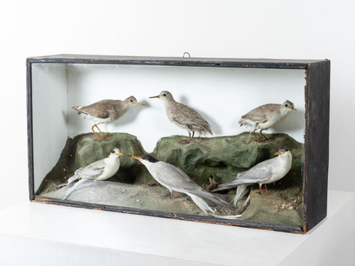 ANTIQUE SHORE-BIRD DIORAMA