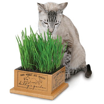 Kitty's Garden Organic Cat Grass & Container