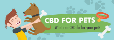 Guide to CBD for Pets (Cats and Dogs) | nctorganics.com