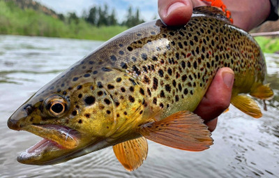 Guided Fly Fishing Trip Booking