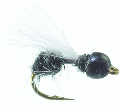 Tungsten Drowned Ant