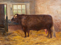 Large 19th Century British Shorthorn Prize Bull Portrait by Anthony De BREE