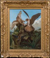 Large 19th Century Pairs Of Hawks Fighting Bird John James AUDUBON (1785-1851)