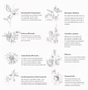 Botanical Therapy Calendula Balm Stick