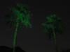 Illuminator Laser Lights by Sparkle Magic- Emerald Dust (Green)