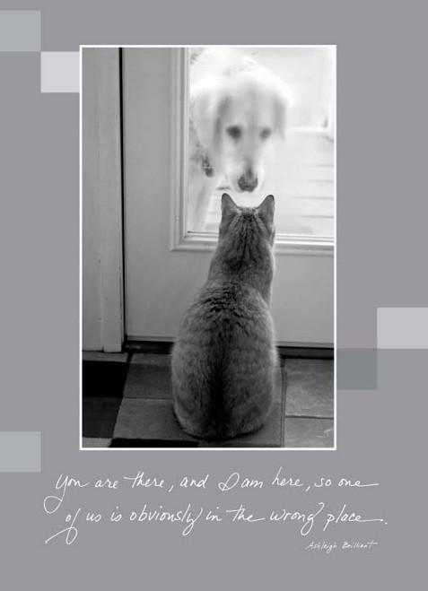 Dog and Kitty 359B