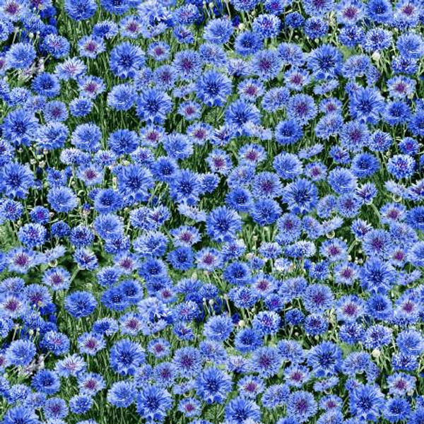Blue Floral Fabric Timeless Treasures