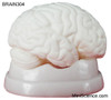 Brain Model, Dissectable in 3 Pieces