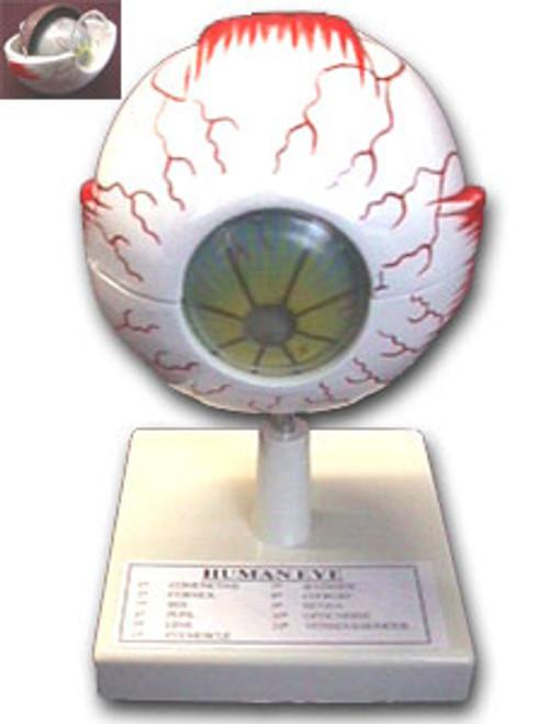 Model of the Eye