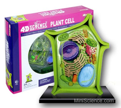 Model of Plant Cell